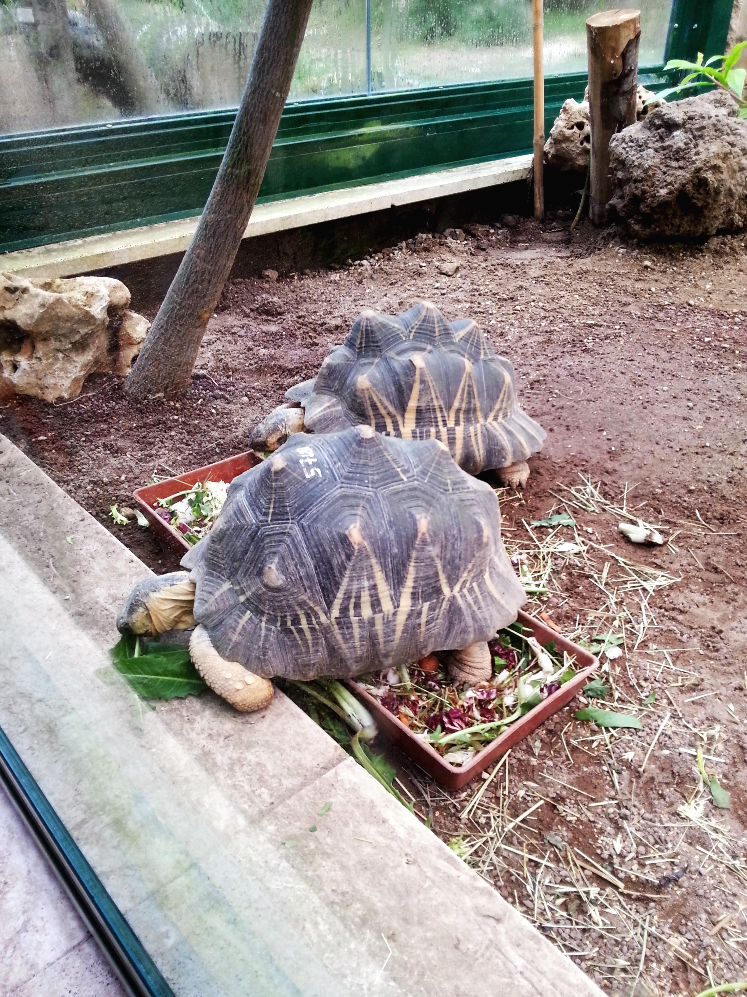 zoo villa borghese rome