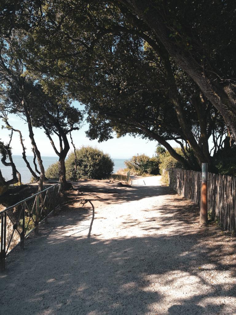 arbre sentier douanier Ballade saint palais sur mer