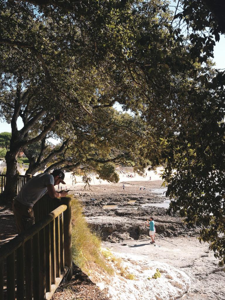 Photos arbre Ballade saint palais sur mer royan