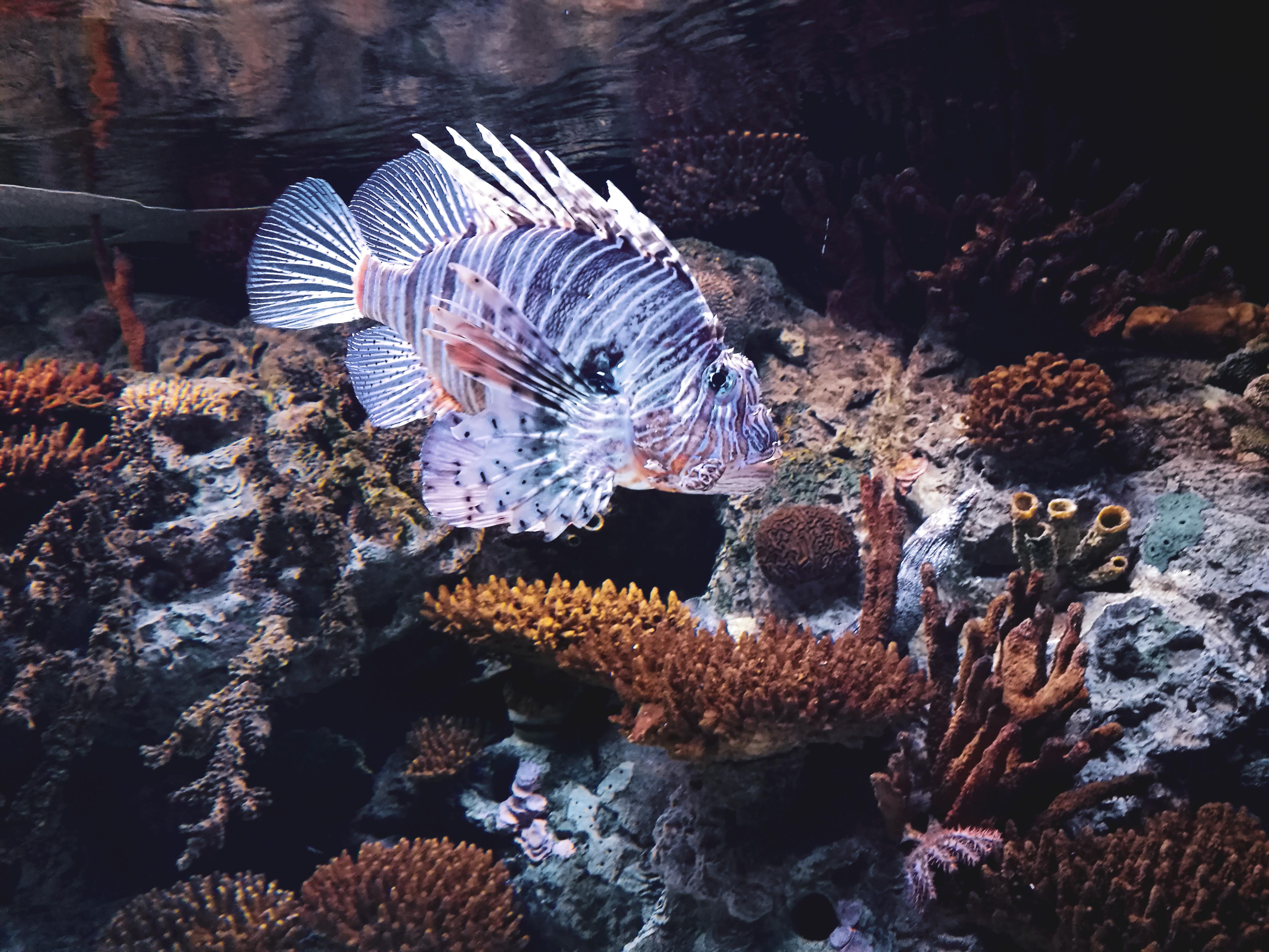 poisson coloré oceanario lisbonne