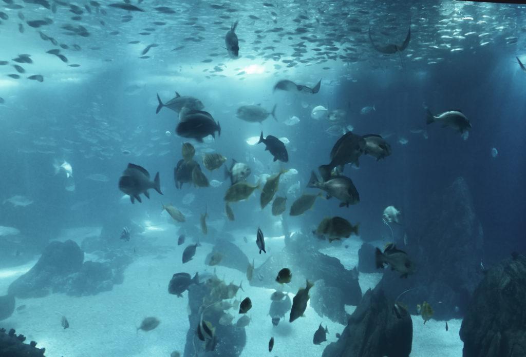 photo poissons oceanario lisbonne