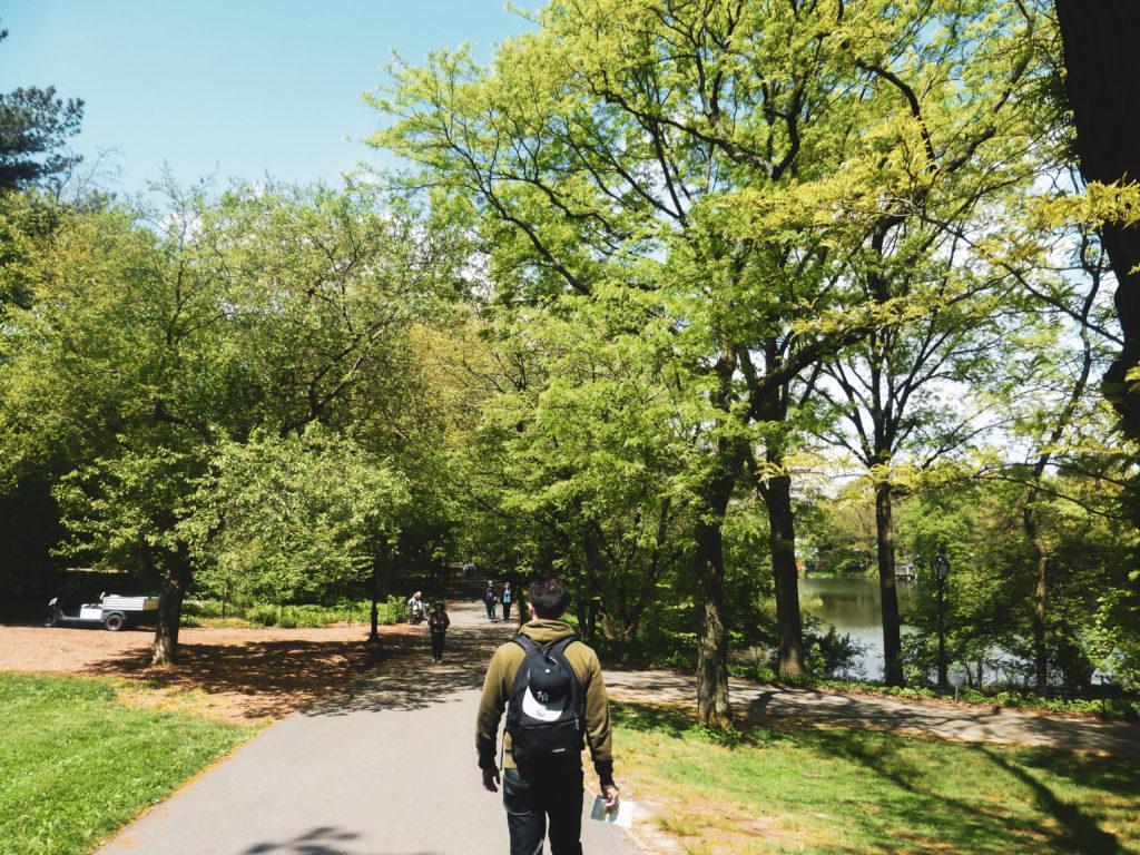 ballade grand arbre central park
