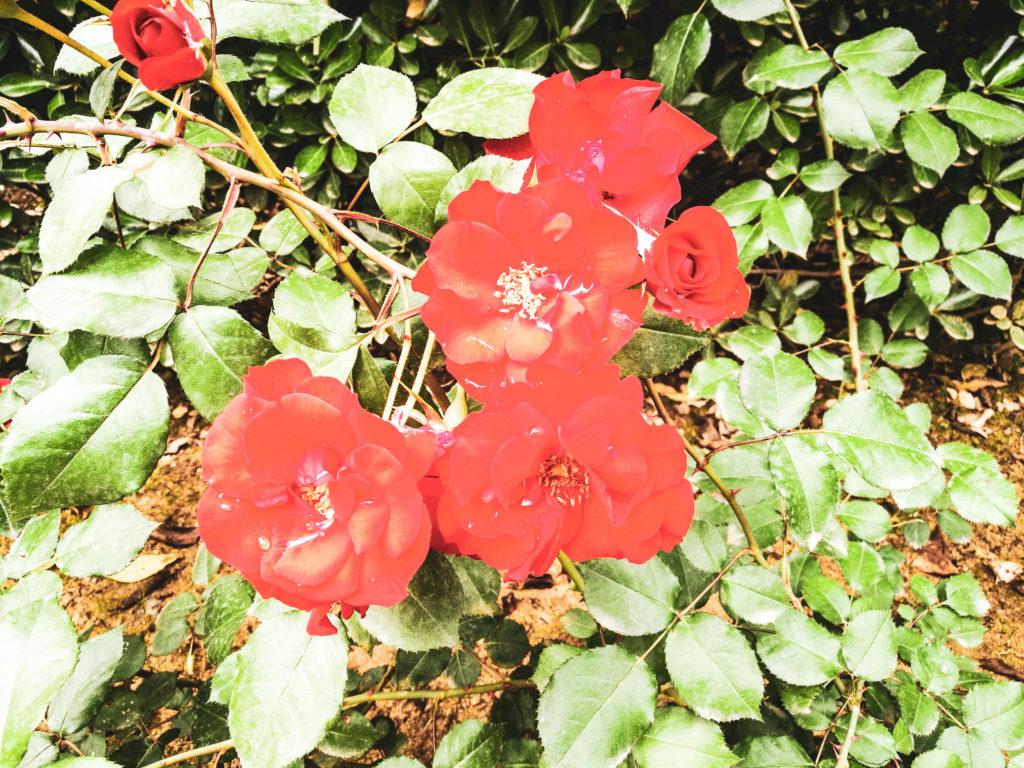 Seville -fleurs