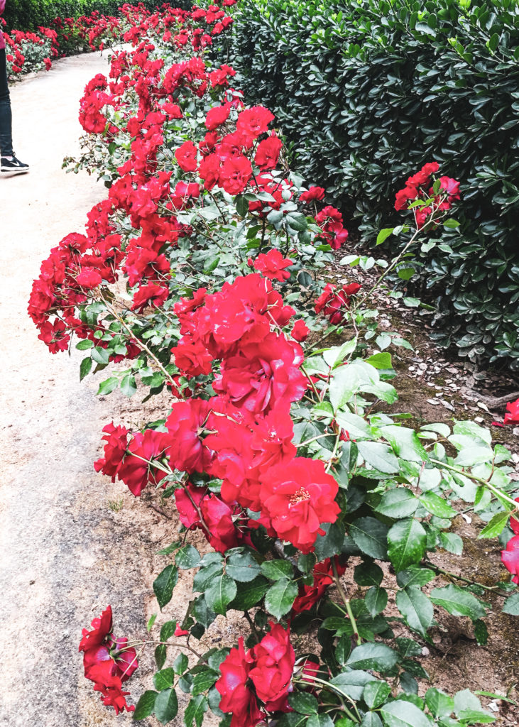 Seville palais alcazar rose