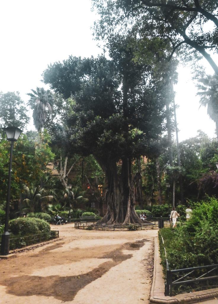 Seville parc arbre