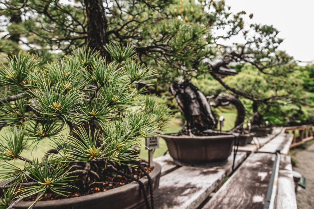 Jardins Happo Hen à Tokyo bonsai