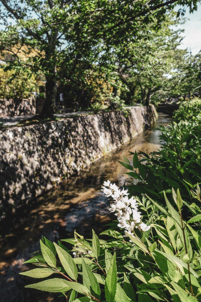 Découvrir kyoto- Chemin des Philosophes